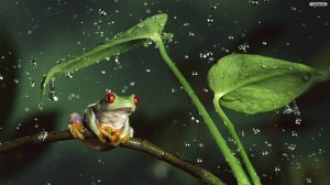 Green-Frog-Under-Rain-Wallpaper